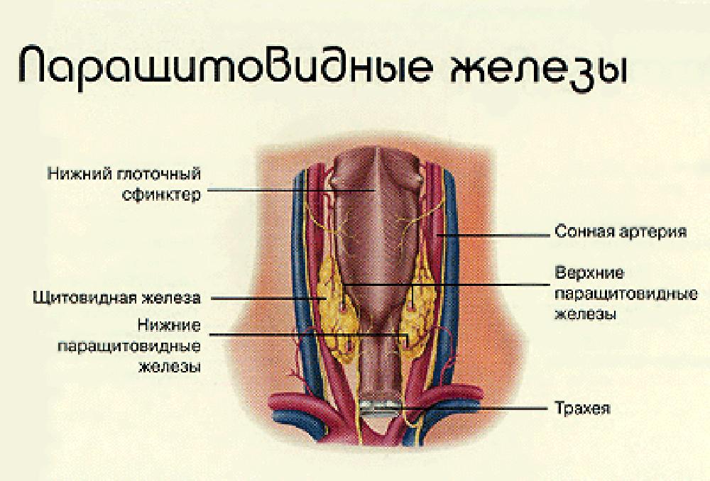 какие таблетки паразитов организме человека
