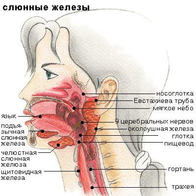 Диета при болезнях слюнных желез